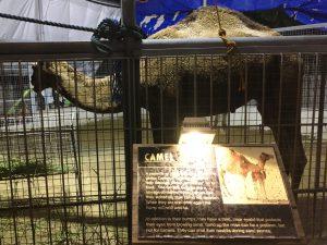 フィリピンアリーナ 動物園 ラクダ