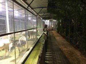 フィリピンアリーナ 動物園 園内は綺麗に整備されている