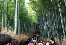 京都観光 竹林の道