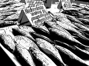 フィリピン 市場 魚 漁業