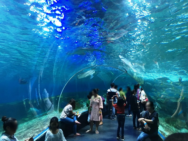 オーシャンパーク 海中トンネル