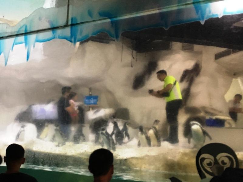 オーシャンパーク ペンギンショー 水族館