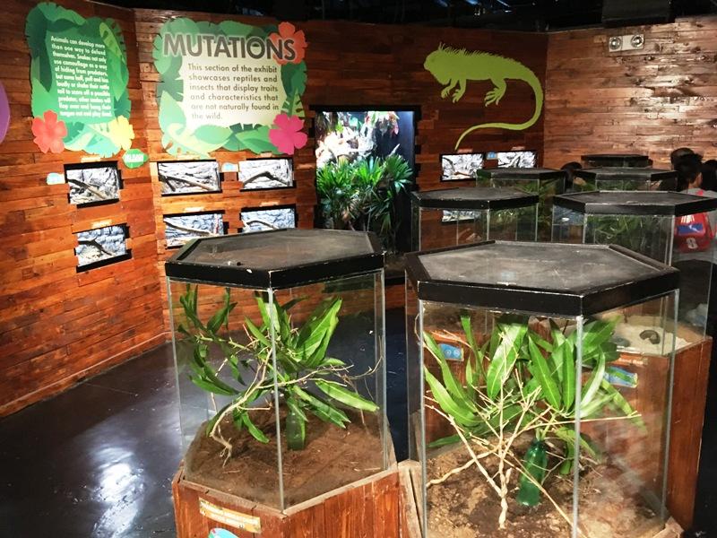 オーシャンパーク内 爬虫類コーナー