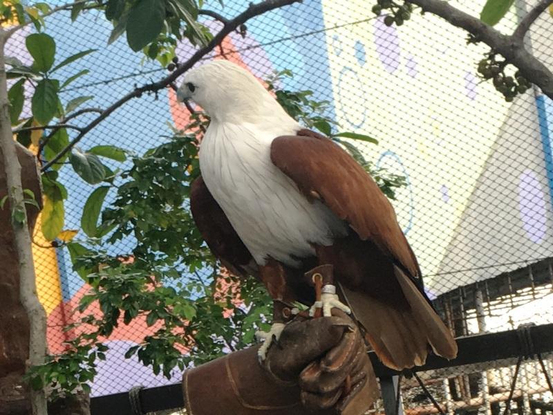 オーシャンパーク ワシ 鳥