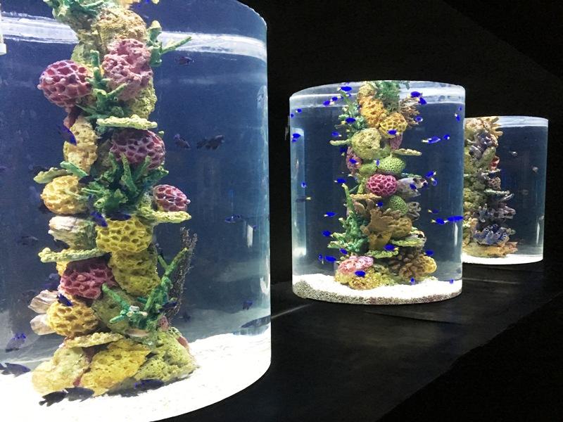 オーシャンパーク 多種多様な水槽